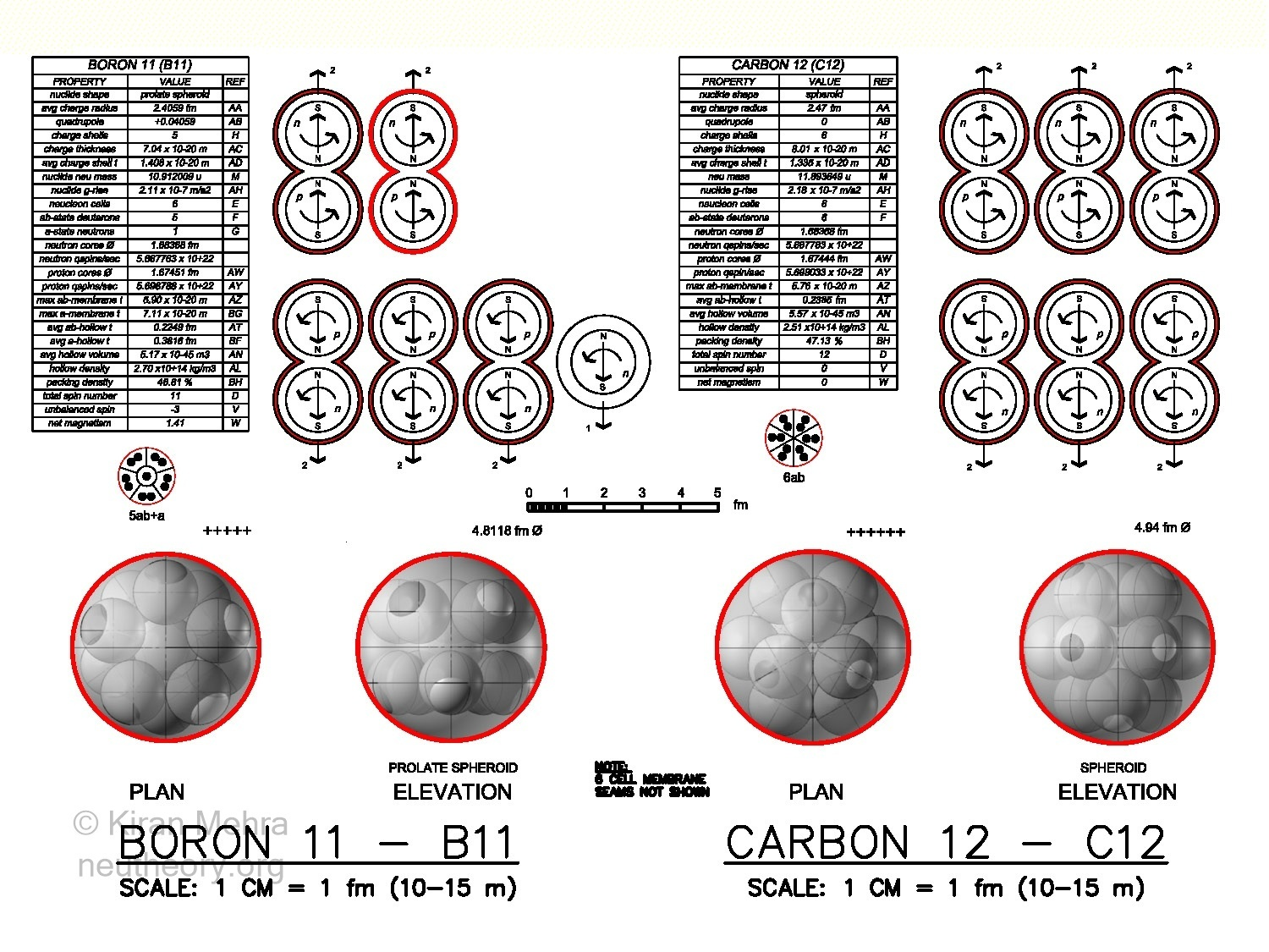 3D graphic images of deuteron and neutron cells clustering to form boron-11 and carbon-12 nuclides